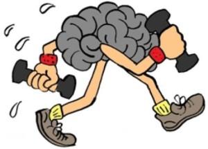 Регулярные прогулки увеличивают мозг