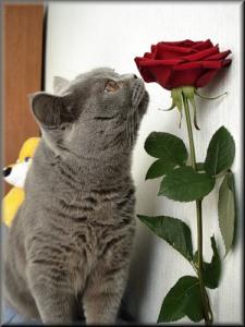 Несчастен, кто любя, взаимности лишен