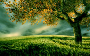 Вслед ветру склоняется трава